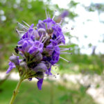 Is Vitex A Fertility Super Herb?